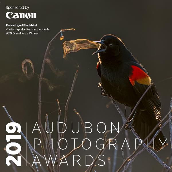 2019 Audubon Photography Awards banner